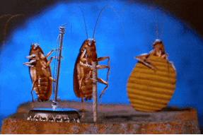 快乐的蟑螂