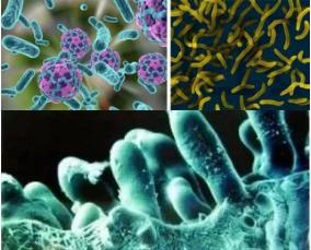 显微镜下细菌
